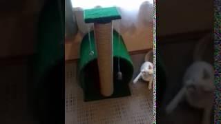 """Новый домик для кота """" кошкин дом """" когтеточка"""