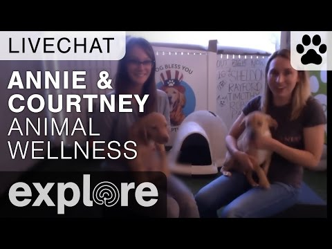 Upper Animal Awareness With Courtney Johnson & Annie Harvilicz - Live Chats