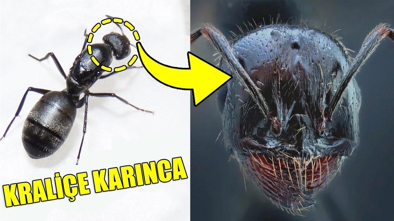İşte Böcekler Yakından Böyle Görünüyorlar - Böcekler Hakkında Bilmedikleriniz
