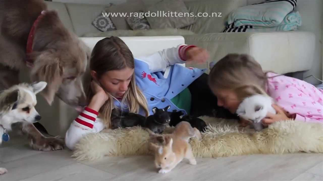 Baby Bunny Rabbits Kittens Puppies and a Parrot Too cute