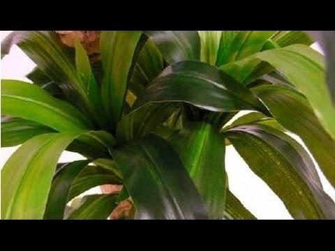 Plantas artificiales de calidad para decorar bamb ficus for Plantas decorativas artificiales bogota