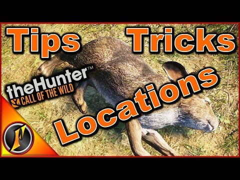 How To Hunt Rabbits | TheHunter: Call Of The Wild 2018