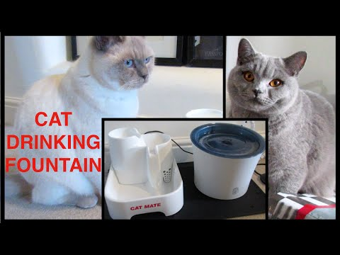 CATMATE & CATIT SENSES DRINKING FOUNTAIN | CHRIS & EVE