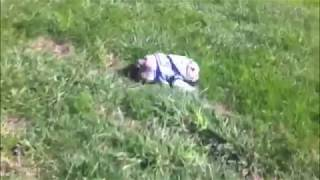 Sophie Rolls Down A Hill - English Bulldog Puppy