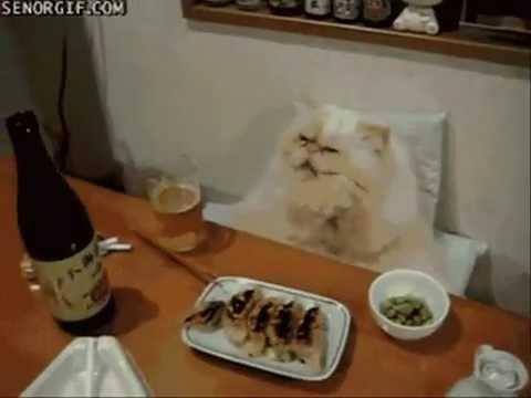 Видео выйду ночью в кухню с котом