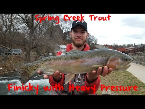 Trout Fishing Pennsylvania's Spring Creek