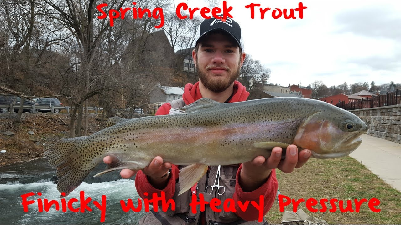 Trout fishing pennsylvania 39 s spring creek youtube for Fishing in pa