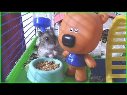 Картинка хомяк из мультфильма вольт (hamster from the cartoon volt.