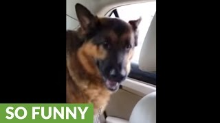 Dog realizes he's at the vet, gives priceless reaction