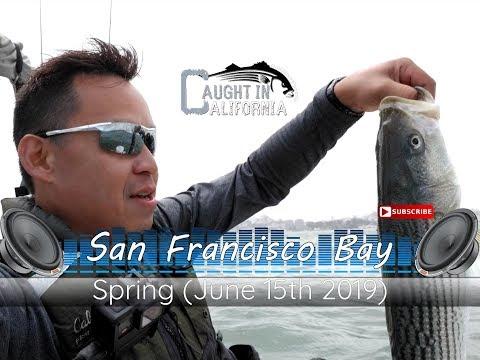 Incredible Striper Action In The San Francisco Bay 6/15/2019