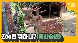 [서울어린이대공원 동물원] Zoo면 뭐하니?(꽃사슴편)썸네일