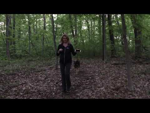 ep11-hiking-with-german-shepherd-part2-hiking-with-dog-in-the-wilderness---forest