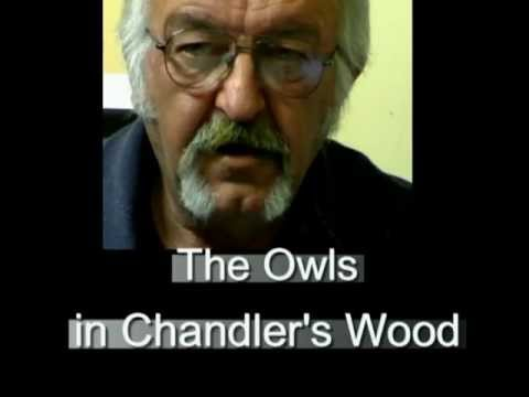 The Owls in Chandler's Wood