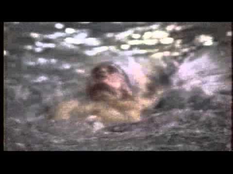 Part7 Cornwallis Swimming
