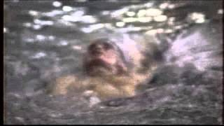 Part7 Cornwallis Swimming