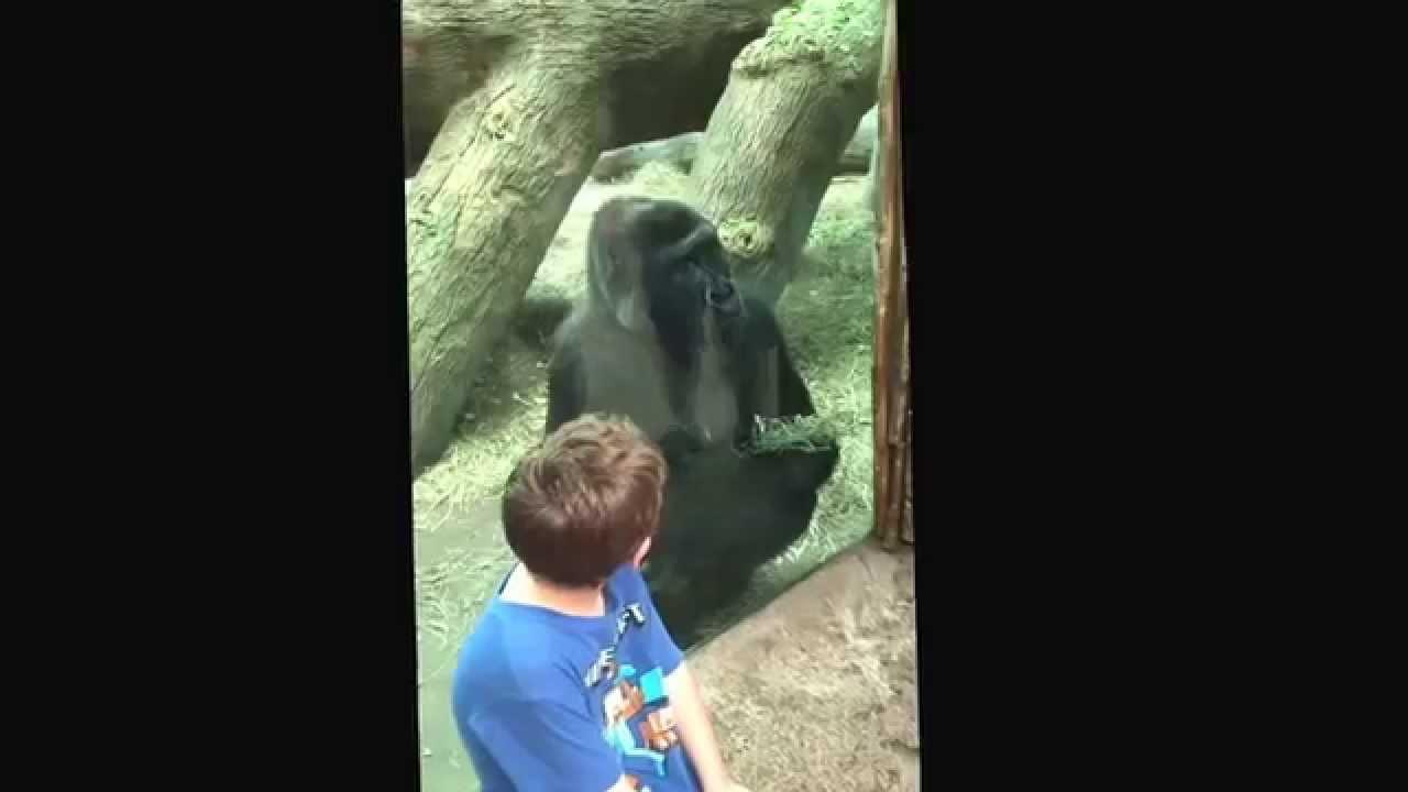 Washoe (chimpanzee) - Wikipedia