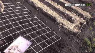 Как посадить Чеснок(Я использовал для посадки чеснока и ровности грядки сетку. Теперь грядка будет идеально ровная и будет..., 2013-11-10T18:21:32.000Z)