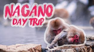 NAGANO DAY TRIP TO SEE MONKEYS IN ONSENS | Japan vlog #6