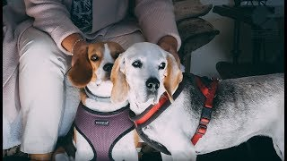 رافال Adamczak خلق الكلب الخاص بك | البيانات | AM الإعلام