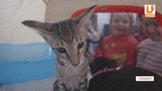 """UTV. """"Без кота и жизнь не та"""", в Оренбурге прошел очередной кинолекторий"""