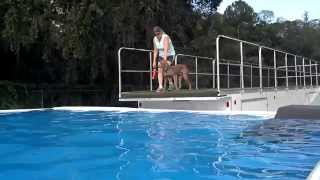 Tucker The Rescued Weimaraner Jumping The Dock!