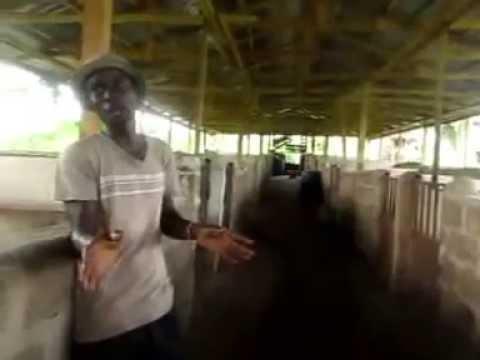 NIDAP Piggery Farm, Ede, Nigeria