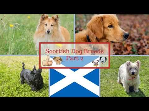 Scottish Dog Breeds Part 2
