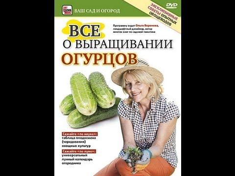 советы огородникам как заработать на огурцах
