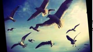 Dolce Mandolin Quartet - Album teaser