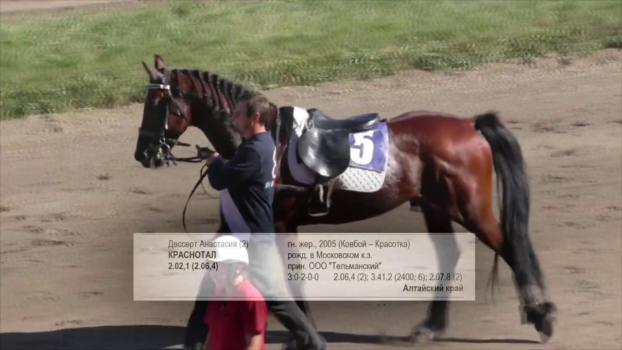 Рысь под седлом. Для лошадей орловской породы. БСК 4 этап. Барнаульский ипподром 2017