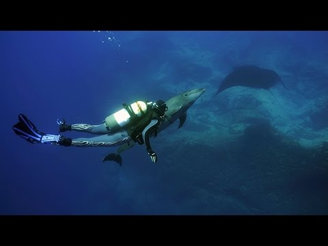 Dolphin meets a Scubagirl at Socorro Island