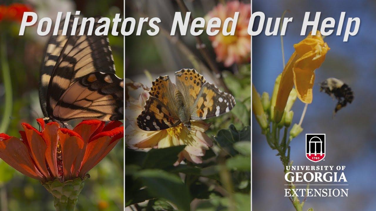 Protecting Pollinators   UGA Cooperative Extension