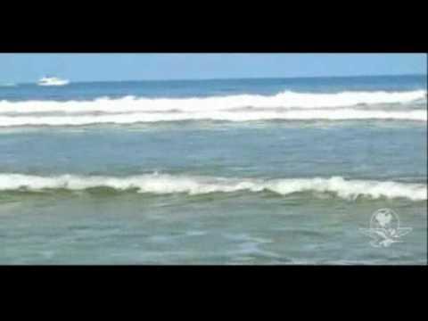 Graban a tiburón que salió hasta una playa