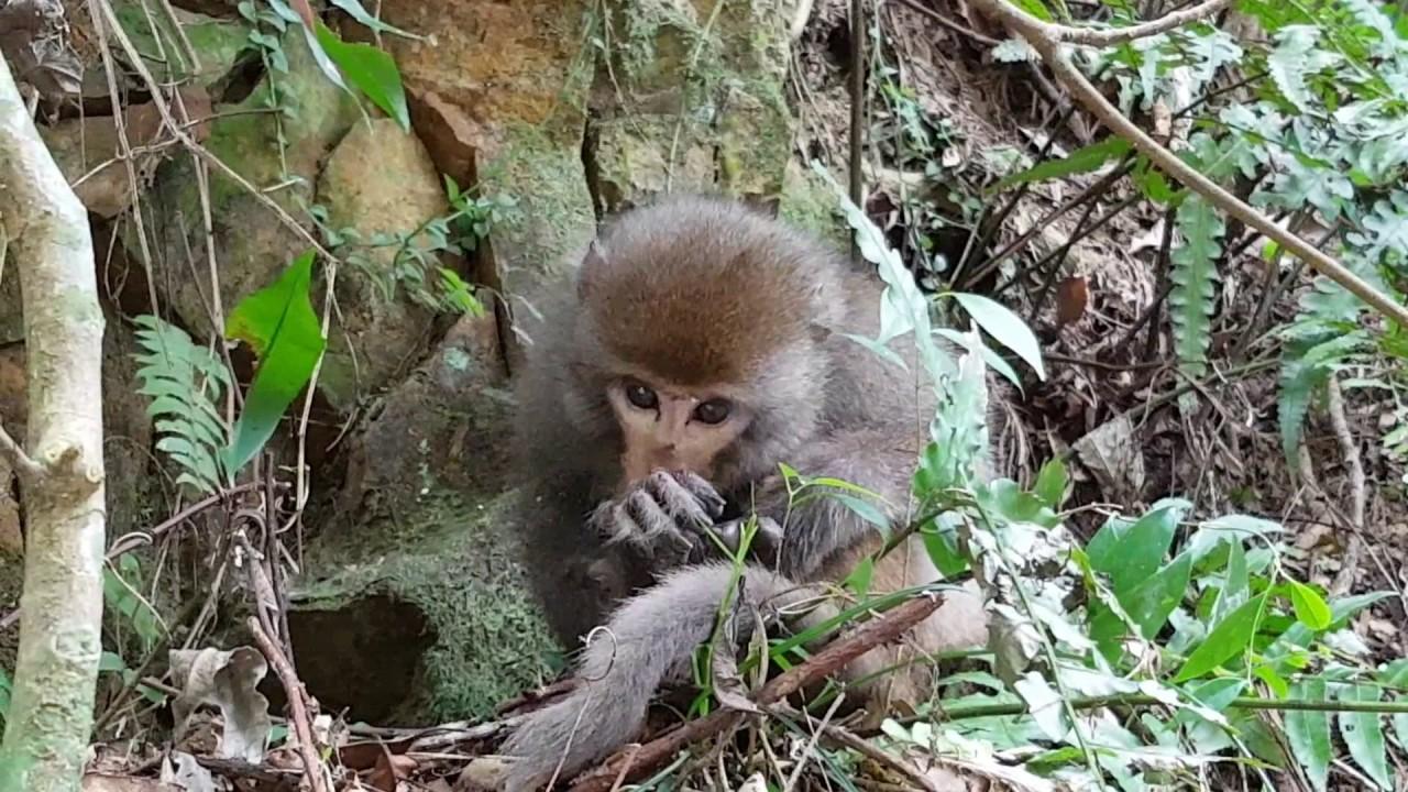 偶遇走失的小猴 - YouTube