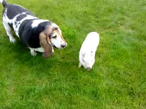 roxane et babe le cochon streaming vf
