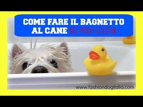 Come fare il bagno al cane come lavare il cane in modo corretto youtube - Come fare il bagno al cane ...