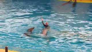 Dolphin Show Jeddah