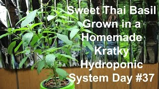 Homemade Hydroponics System | Kratky Sweet Thai Basil Grow Part #2