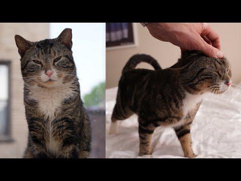 Street Cat Rescue: Duke