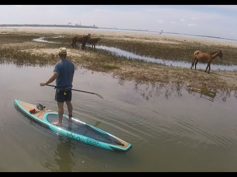 paddle boarding from Amelia Island to Cumberland Island