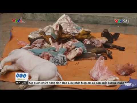Bắt Quả Tang Cơ Sở Vận Chuyển Lợn Chết Được Giả Làm Lợn Mán Để Mang Đi Tiêu Thụ