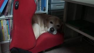 昼寝に良い場所を見つけたムック.