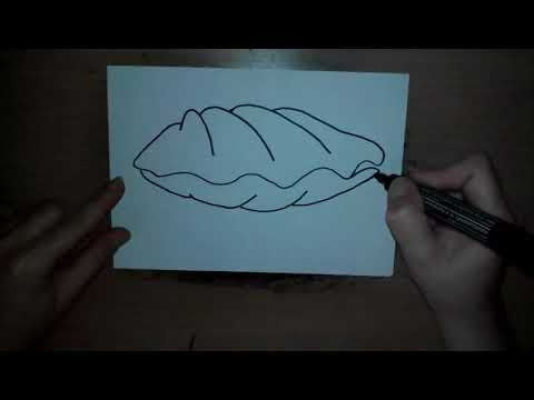 Comment Dessiner Une Coquille How To Draw A Seashell как нарисовать милые рисунки