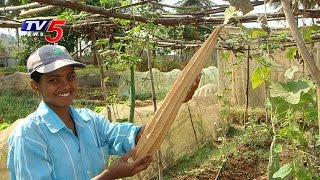 Farmers Yielding Good Profits By Ridge Gourd Seeds Harvest | Guntur | Telugu News | TV5 News
