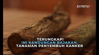 Kanker payudara masih menjadi penyebab kematian nomor satu bagi wanita Indonesia. Tapi tahukah Anda .