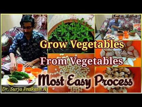 Grow Vegetables from Vegetables in the Easiest Way