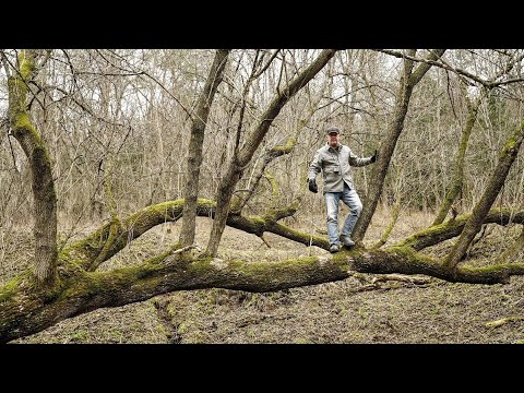 4 Hot Trees You Need On Your Deer Hunting Land