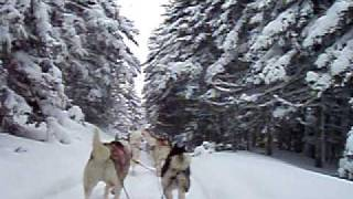 Dog Sledding With Martin Hanzalek And Elaine Pinnard
