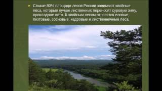 Презентация:Леса России(Патеевой Александры)^^