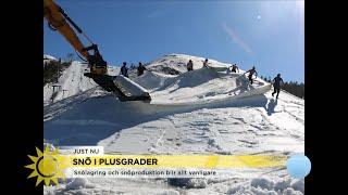 """Här är dukarna som räddar vintern: """"Isolerar snön till nästa år - Nyhetsmorgon (TV4)"""
